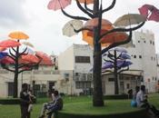DAILY PHOTO: Umbrella Trees
