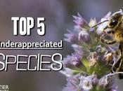 Underappreciated Species