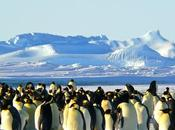Facts About Emperor Penguins