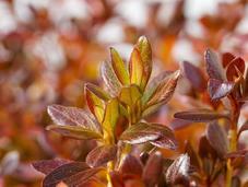 Guest Post-Prevent Garden Disease Looking Ahead