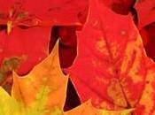 …Fall