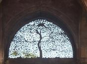 DAILY PHOTO: Mosque Trees, Ahmedabad