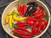Chilli Harvest