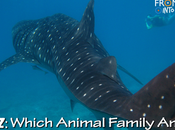 QUIZ: Which Animal Family Does THIS Belong