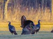 Prepare Spring Turkey Season Simple Steps