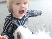 Review: Little Live Pets Dream Kitten Cuddles