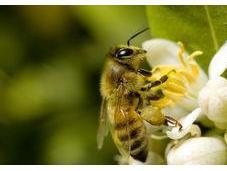 Proven Powerful Benefits Pollen