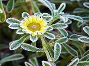Avoid Winter Pest Invasion