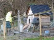 Repairs Henhouse