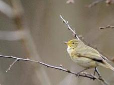 Britain's Birds Winners Losers