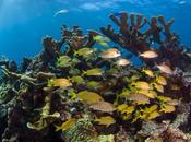 Belize: Natural Underwater Beauty