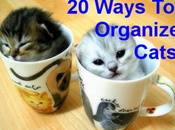 Brilliant Ways Organize Your Cats