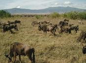 Project Week: Tanzania Rural Teaching