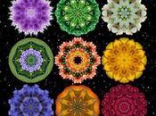 2012 Flower Mandala Calendar Water Lily