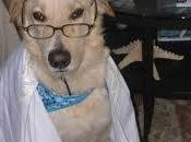Happy Bark Mitzvah! Today Dog!