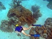 Bonaire's Underwater Wonderland
