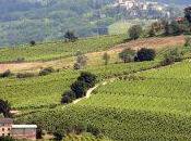 Oltrepo Pavese Milan's Secret Wine Region