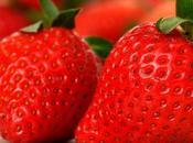 Grow Strawberries Pipe