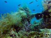 Talima Marine Sanctuary: Seamless Blend Nature Humanity