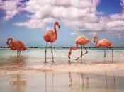 Dreaming Private Island Aruba