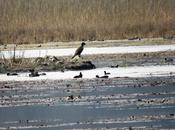 Uttar Pradesh Bird Festival 2018: Grand Success Boost Ecotourism