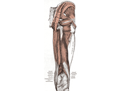 Friday Q&A: Recovering from Piriformis Syndrome