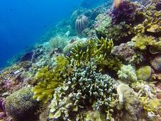Dakit-dakit: Another Fascinating Underwater Kingdom Mactan