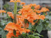 Spring Flowers Want Your Central Florida Garden
