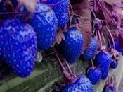 Plant Strawberry Seeds?