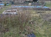 Back Magical World Allotments