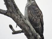 Photo Essay: Avian Wonders Suhelwa Haven Bird Lovers