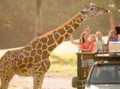 What's Spring Summer Travel Busch Gardens