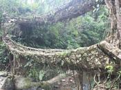 DAILY PHOTO: Double Decker Root Bridge