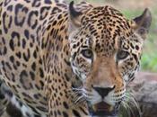 DAILY PHOTO: Creatures Mysore