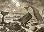 History Pauling Blog: White Whales Other Challenges
