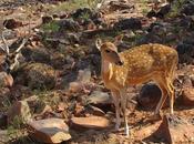 Deer Black Buck Chinkara Crime Killing Meek