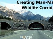 Creating Man–Made Wildlife Corridors