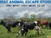 Great Animal Escape Stories What They Mean