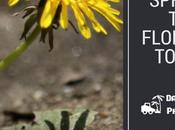 Spring Weed Control Tips Florida Yards Landscapes