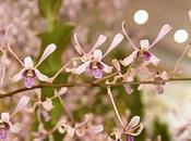 Orchid Wonderland Arrived Singapore