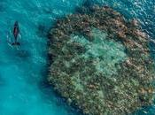 Video: Stunning Great Barrier Reef Threats That Faces