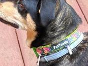 PetTastic Collar Nymeria!
