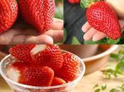 Germany's Erdbeersaison 2018, Where Find Best Strawberry Seeds