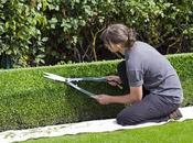 Everything Need Know About Hedge Trimming