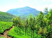 Munnar Perfect Destination Trip with Friends