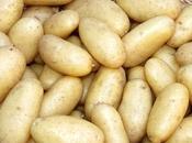 "First Early Potato ""Juliette"""