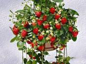 Uncommon Gardening