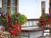 Prep Your Home Garden Summer