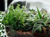 Benefits Utilizing Plants Your Office Décor