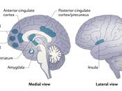 Neuroscience Mindfulness Meditation